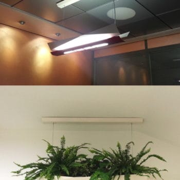 From lamp to planter