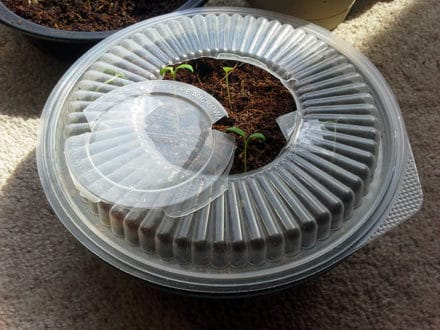 DIY: Tupperware greenhouse