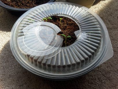 DIY: Tupperware greenhouse