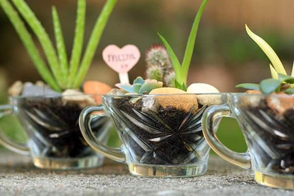 Mini succulent gardens in vintage glasses Do-It-Yourself Ideas Garden Ideas