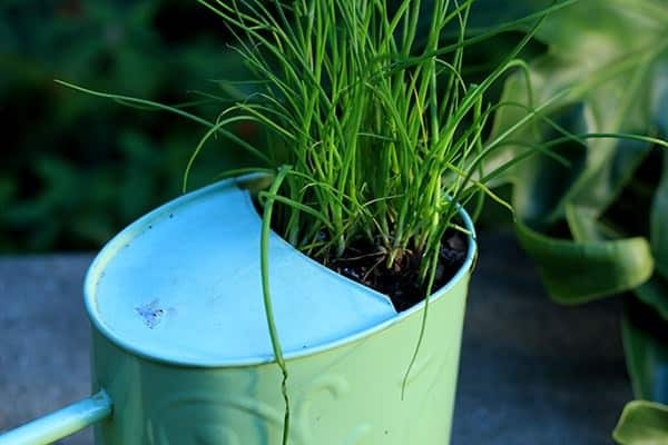 How to Create a Planter Pot from an Old Watering Can Do-It-Yourself Ideas Garden Ideas