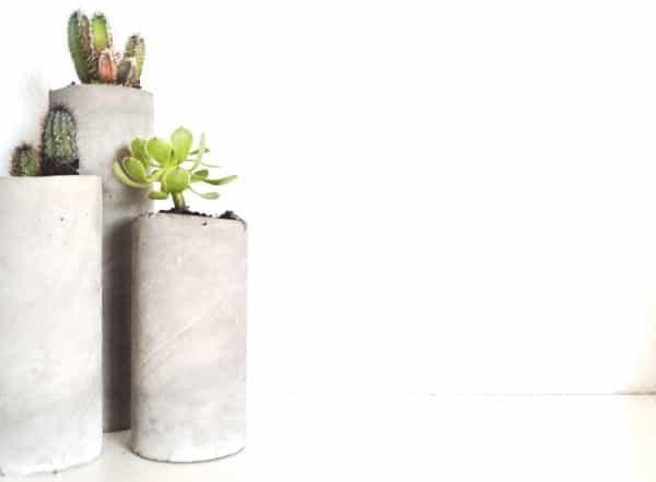 cactus-pringles-10