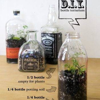 DIY: Bottle Terrarium