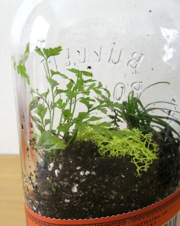 Diy: Bottle Terrarium Do-It-Yourself Ideas Garden Ideas