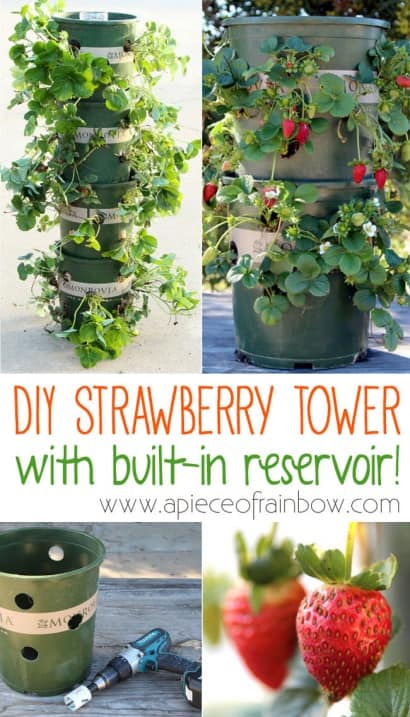DIY: Strawberry Tower With Built-in Reservoir