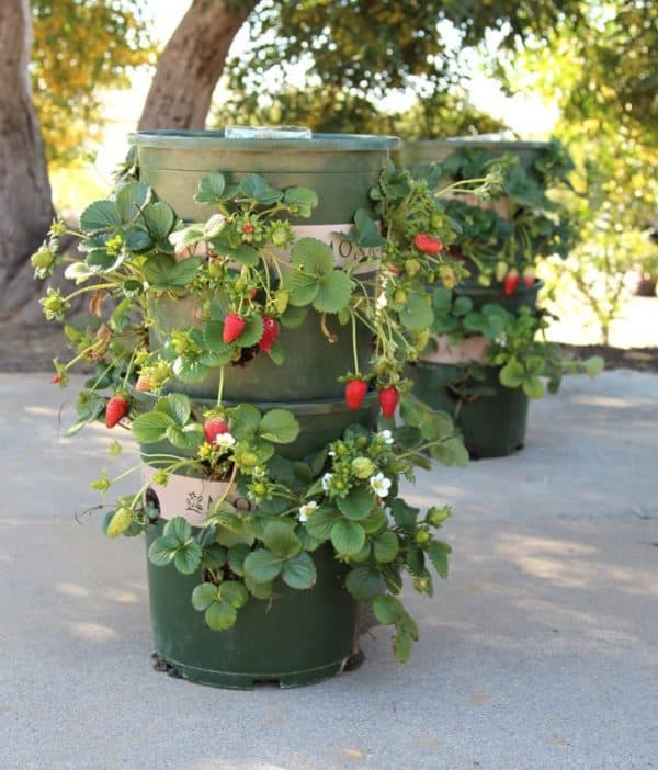 DIY: Strawberry Tower With Built-in Reservoir Do-It-Yourself Ideas Garden Ideas