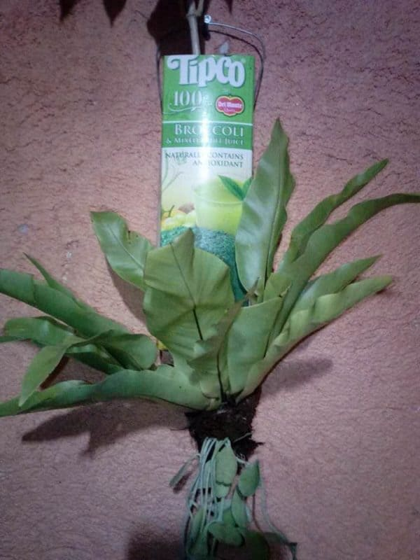 Tetrapak as Plant Pot Do-It-Yourself Ideas Recycled Packaging