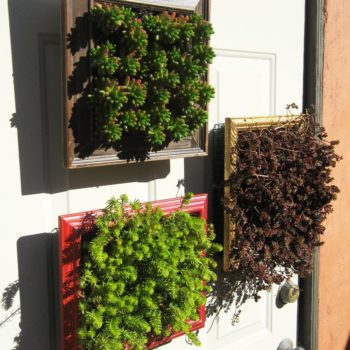 Vertical Planters from Repurposed Picture Frames
