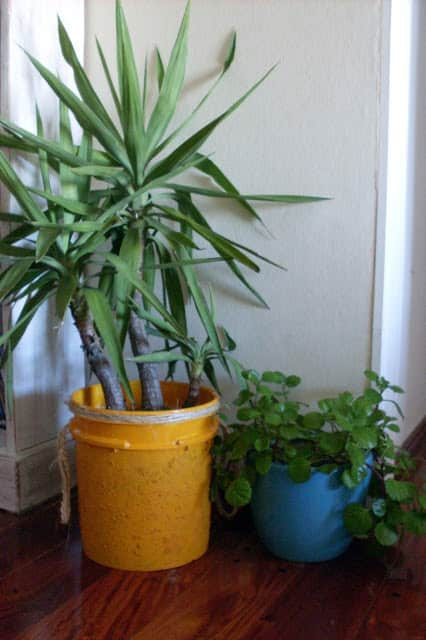 Recycling Paint Bucket Into Flower Pot Do-It-Yourself Ideas Recycled Packaging