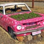Old Car Reused Into Pink Planter