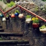 Teapots Flowers