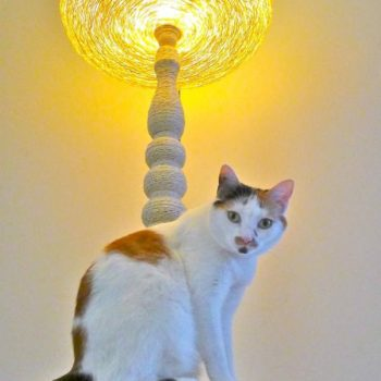 Lighting cat tree