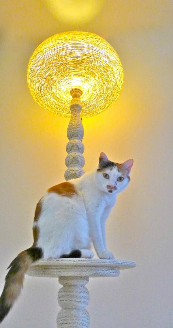 Lighting Cat Tree Lamps & Lights