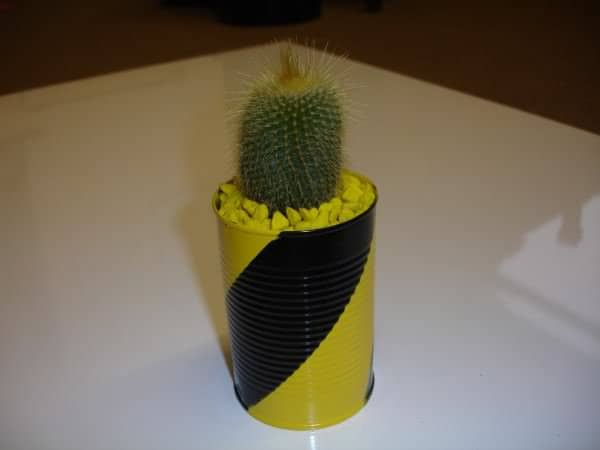 Cantus! The Cacti In Cans