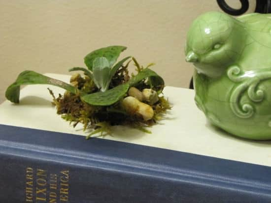 Old Book DIY Planter Do-It-Yourself Ideas Recycling Paper & Books