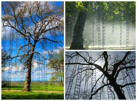 L'arbre Aux Echelles / Ladders Tree