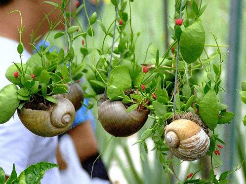 Diy: Snail Shell Into Mini Garden Planters Do-It-Yourself Ideas Garden Ideas