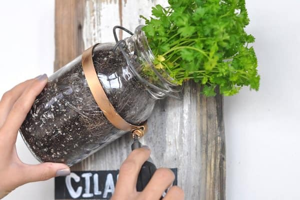 Mason Jar Herb Garden Do-It-Yourself Ideas