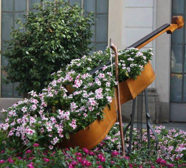 Cello Planter Garden Ideas