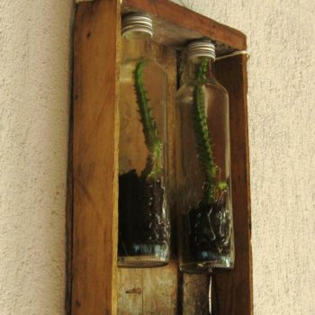 Original Planters for Succulents From Recycled Glass Bottles