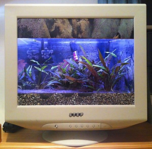 22 Monitor Fishtank Recycled Electronic Waste