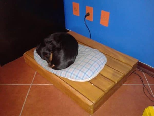 New Bed for the Dogs! Do-It-Yourself Ideas