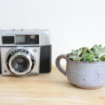 Ceramic Cup Succulent