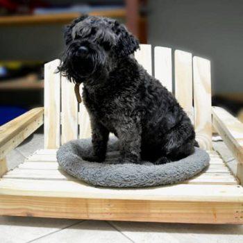 A pallet bed for a pet