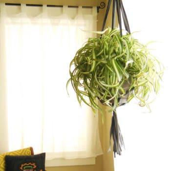 Recycled inner tube plant hanger