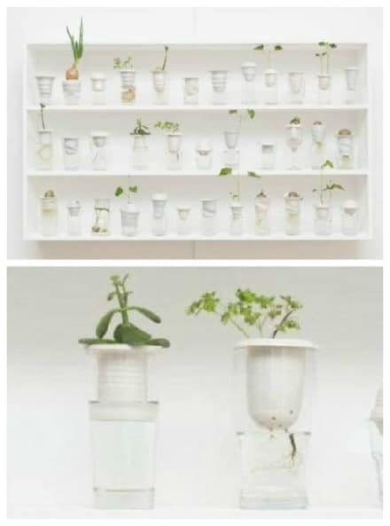 Repurposed Glassware into Tiny Greenhouses