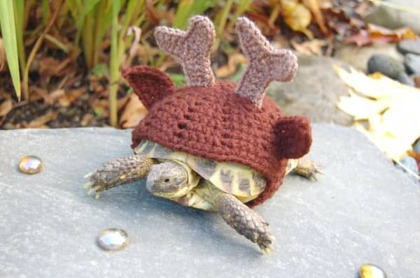 Crocheted Tortoise Cozy Accessories