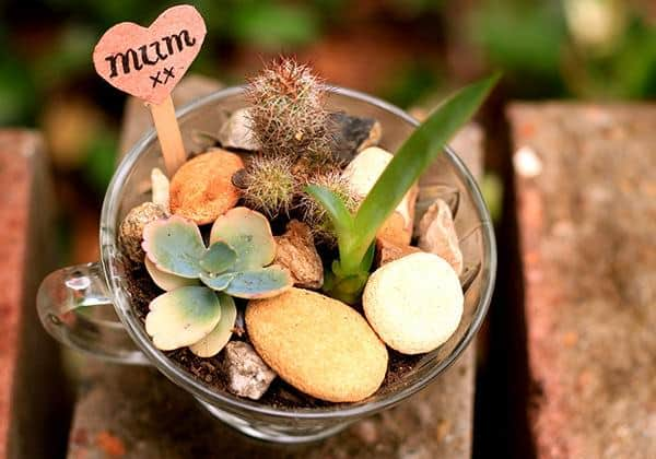 Mini Succulent Gardens In Vintage Glasses O Recyclart