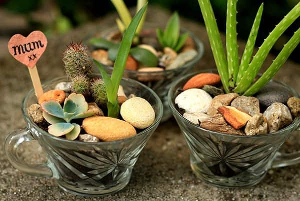 Mini Succulent Gardens in Vintage Glasses Do-It-Yourself Ideas Garden Ideas