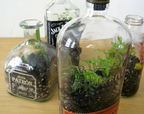 Diy: Bottle Terrarium Do-It-Yourself Ideas Garden Ideas