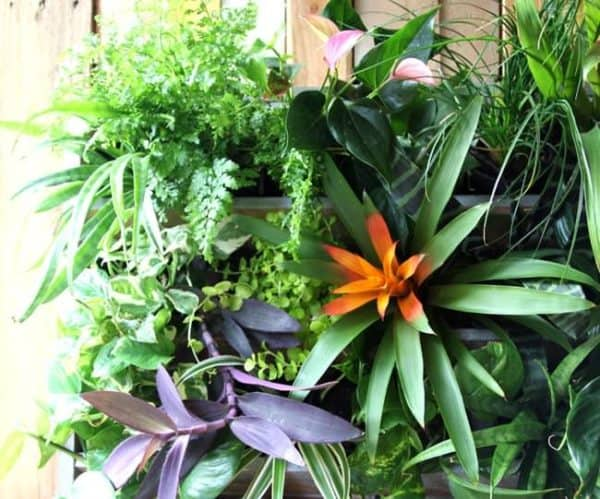Tropical Pallet Paradise: A Renters' Remodel Story Do-It-Yourself Ideas