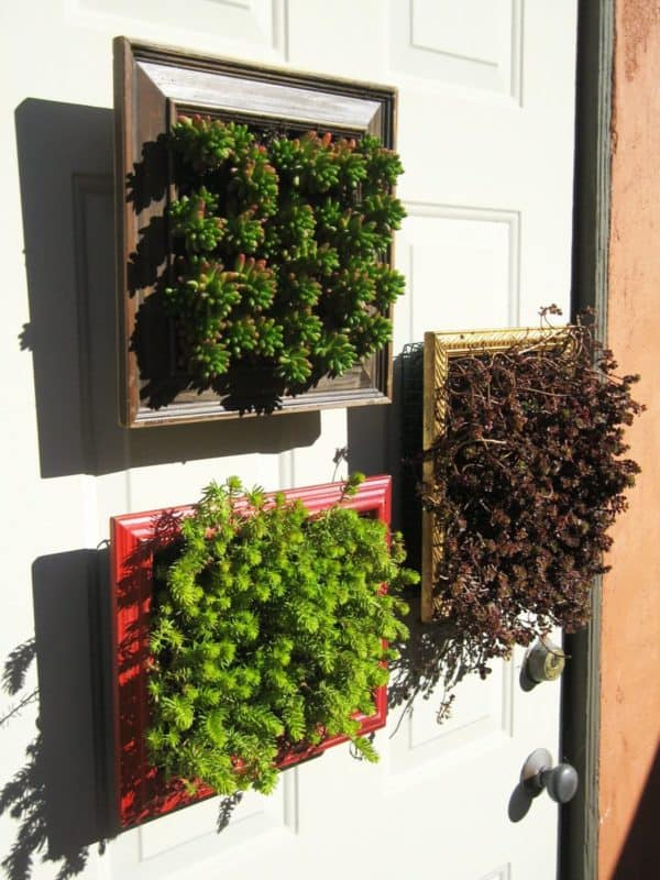 Vertical Planters from Repurposed Picture Frames Do-It-Yourself Ideas Garden Ideas
