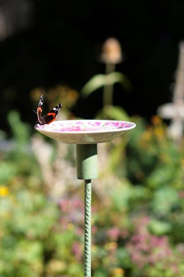 Old Saucer Into Butterfly Feeding Place Garden Ideas