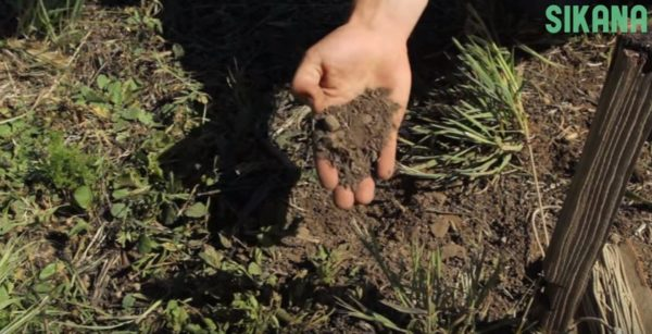 Biointensive Soil Prep assessing your current soil condition is critical.