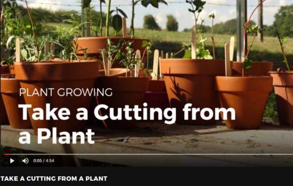 Diy Video Tutorial: Taking Cuttings From Plants! Diy video tutorials Do-It-Yourself Ideas Garden Ideas