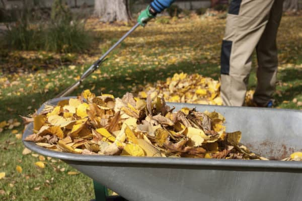 Put Those Autumn Leaves to Good Use in Your Garden Garden Ideas