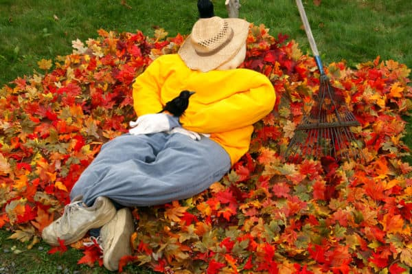 Put Those Autumn Leaves to Good Use in Your Garden