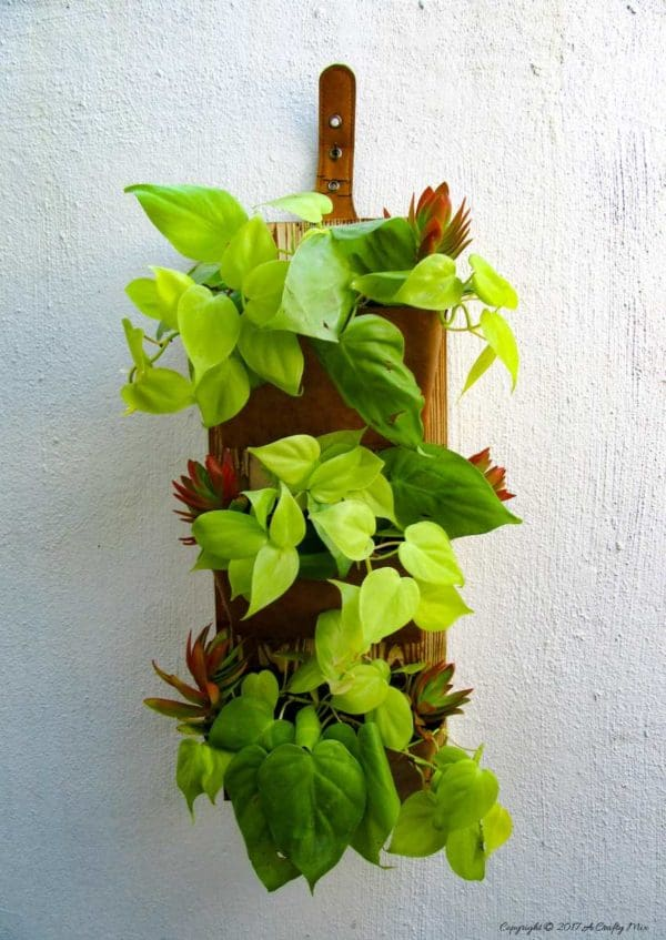 Upcycled Dvd Case Vertical Garden Great for Indoors or Outdoors Garden Ideas Recycled Packaging