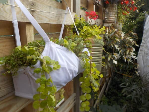 Upcycled Bra Planter is suitable for annuals.