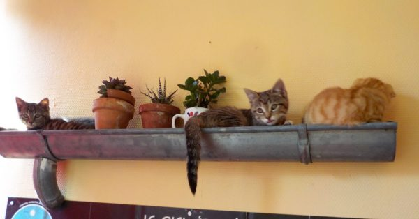 Upcycled Rain Gutter Shelf Stores Kitties / Chats De Gouttières
