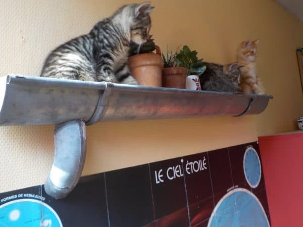 Upcycled Rain Gutter is used as a shelf in the kitchen to store plants for the winter, but our kittens have taken a big liking to the shelf.