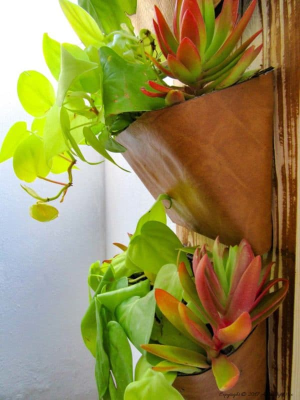 Transform old DVD cases into wall planters - one of our top 5 Recycled Art Projects ideas to inspire you!