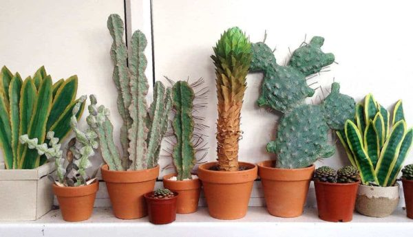 Cardboard Cactuses For Your Home Decor Recycled Cardboard