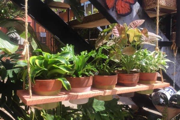 Cedar Plant Swing Holder Garden Ideas