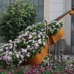 cello-planter