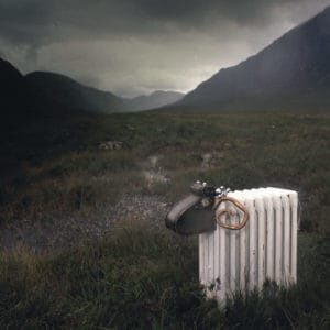 highlands-sheep